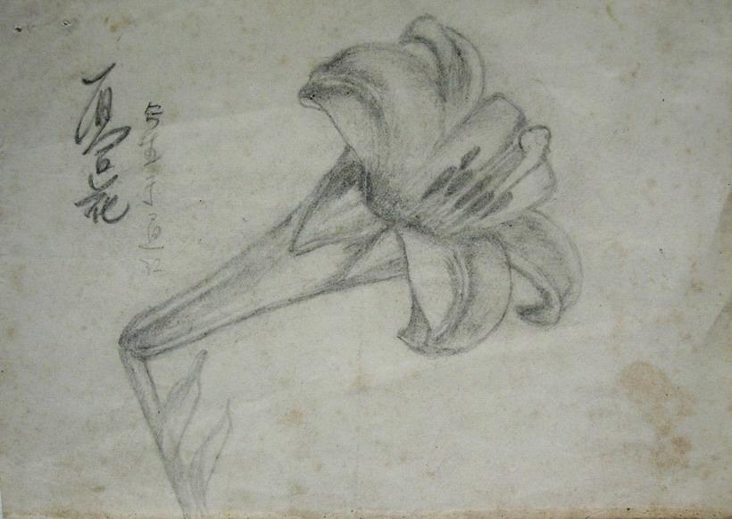 至今这张铅笔画——山百合