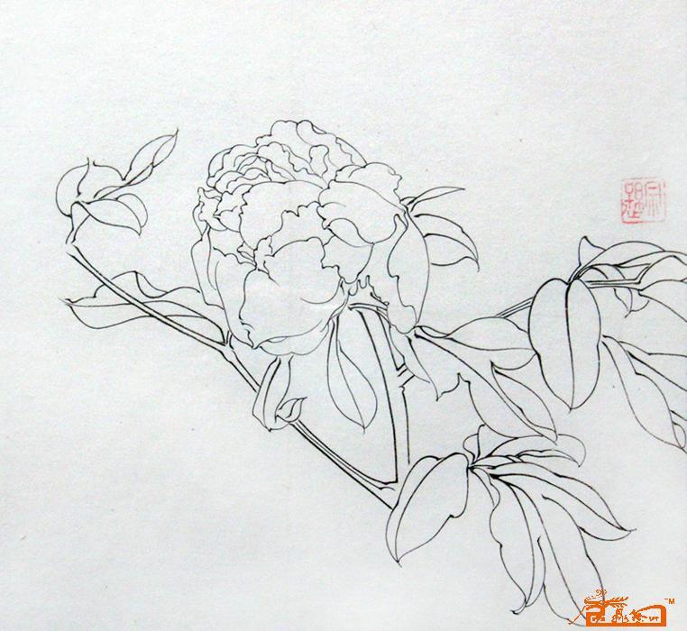 工笔牡丹白描图,工笔画白描稿   牡丹白描 - 国画工笔·陶