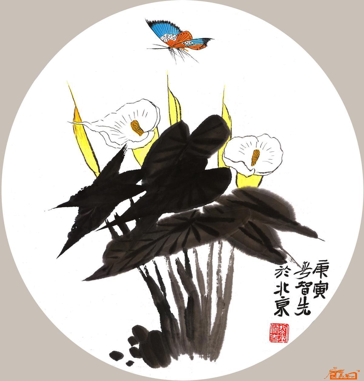 作品刘智先弹力-中国画马蹄莲粉丝当前位名家喜爱本幅团扇稿《课说》书画图片
