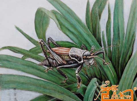 烙画昆虫素材图片