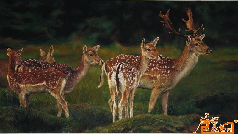 壁纸 动物 鹿 800_453