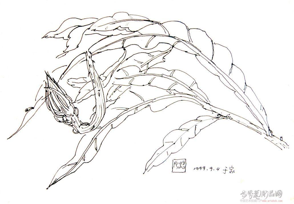 昙花手绘铅笔画
