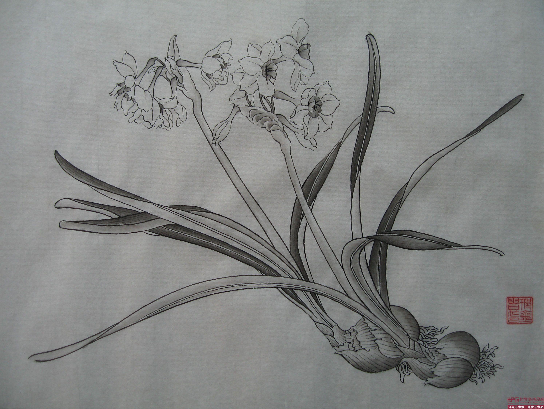 水仙花素描雕刻图片