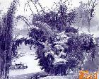 李鸿印漆画作品